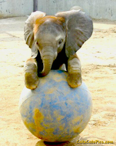 Cute-baby-elephant-playing
